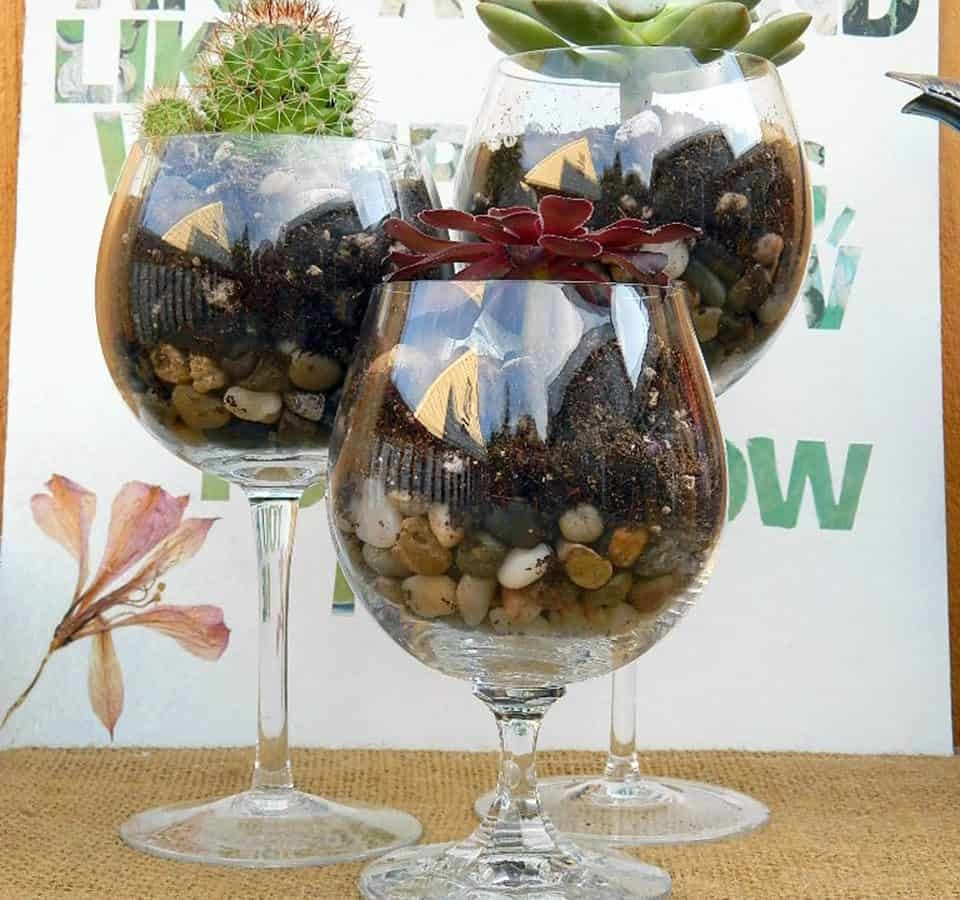 Wine Glass Terrariums